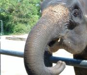 泰国三攀象乐园