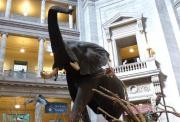 美国史密森尼国家自然历史博物馆